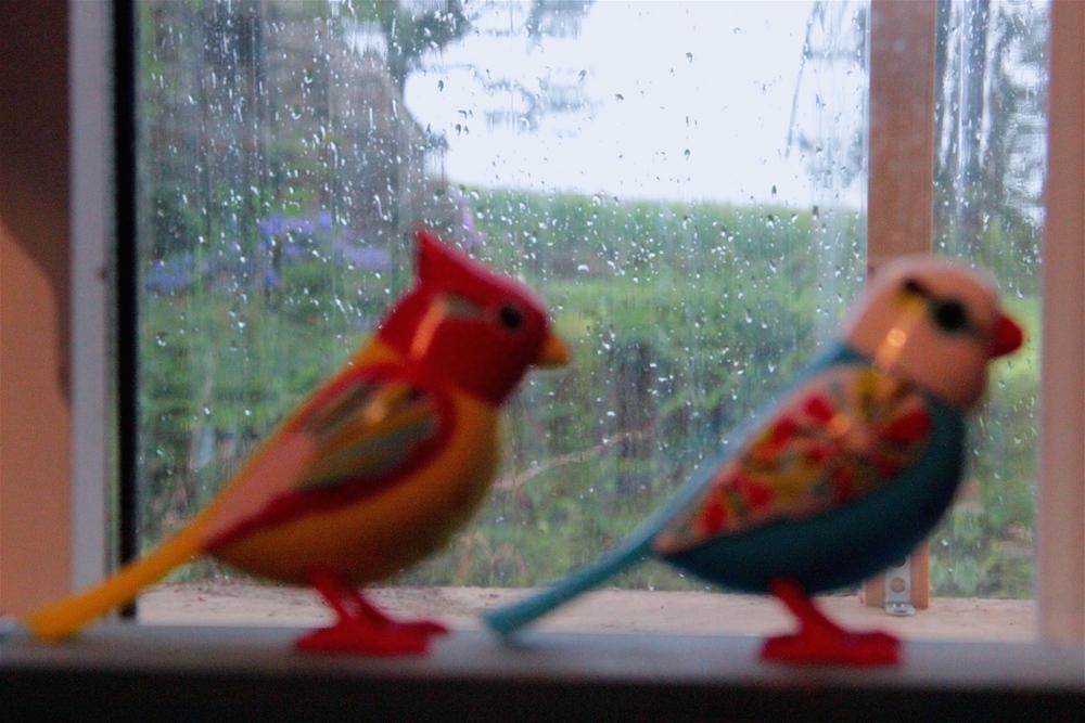Les petites musiques de pluie ©P.Burguin