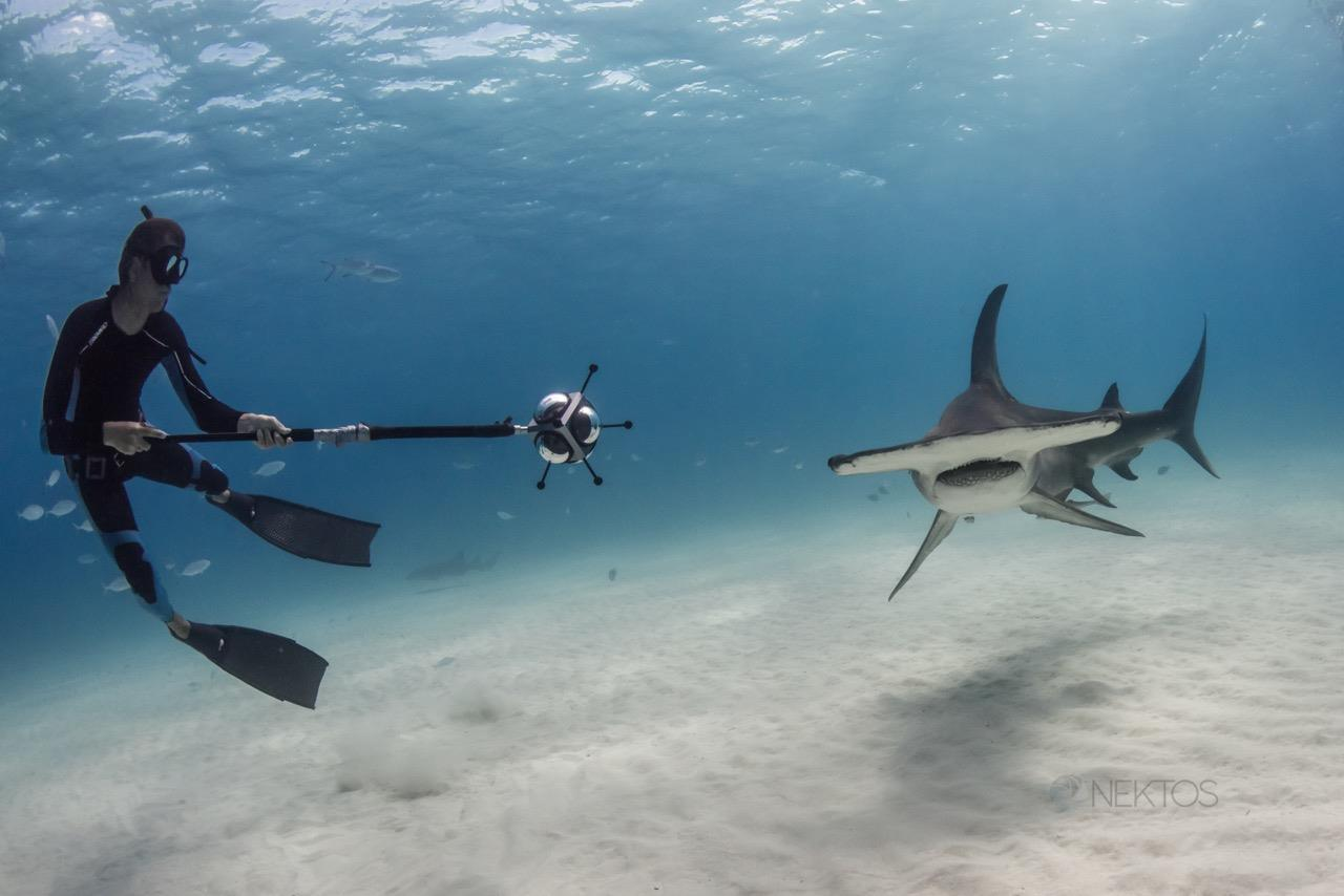 Rencontre subaquatique _Dolphin Man VR © Nektos